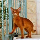Proud cat Royalty Free Stock Photos