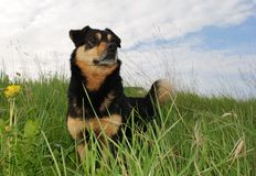 The Proud Dog royalty free stock photos