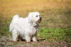 Proud dog Stock Photo