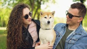 Proud dog owners pretty girl and handsome guy are playing with shiba inu dog, kissing it and scratching its fur relaxing stock video footage