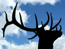 Proud Elk. Elk antlers silhouetted against clouds and blue sky Royalty Free Stock Photos
