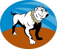 Proud English bulldog Royalty Free Stock Photography