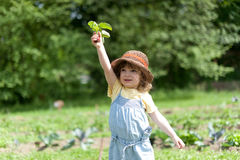 Proud girl with radish. A little is showing harvested radish in a vegetable patch Stock Photography