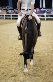 An equestrian show in Liverpool royalty free stock photography