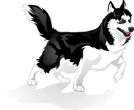 Proud Huskies. Vector illustration running dog Huskies Stock Images