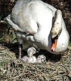 Proud mum Stock Images