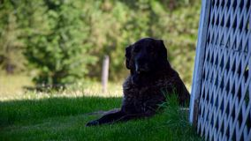 Man`s Best Friend Resting in the Shade stock images