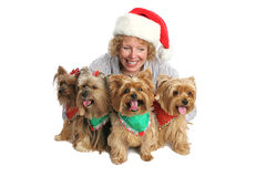 Proud Owner with Yorkies Royalty Free Stock Photo