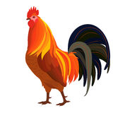 Proud Red Rooster Stock Images