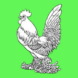 Proud rooster coloring on green Royalty Free Stock Image