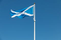Proud Scottish flag flapping in the wind Royalty Free Stock Photos