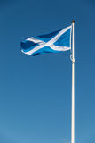 Proud Scottish flag flapping in the wind Royalty Free Stock Photo