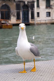 Proud seagull Stock Photos
