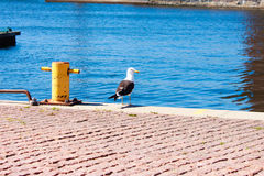 Proud seagull in port Royalty Free Stock Photos