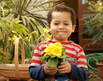 Proud young gardener with a primrose plant.