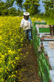 Proudly beekeeper som håller ögonen på hans bin Arkivfoton