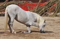 Proue de cheval Photos stock