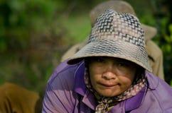 PROVÍNCIA de KANDAL, CAMBOJA - 31 de dezembro de 2013 - trabalho fêmea do arroz Imagem de Stock