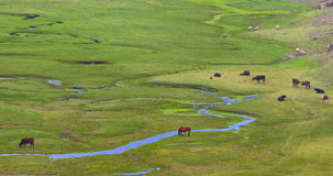 Província de Yunnan de China, o platô   Imagem de Stock Royalty Free