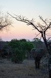 Províncias do parque nacional de Kruger, do Limpopo e do Mpumalanga, África do Sul imagens de stock royalty free