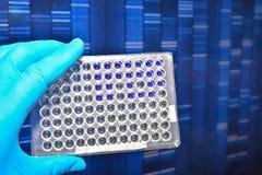 Prova del DNA in laboratorio Fotografia Stock Libera da Diritti