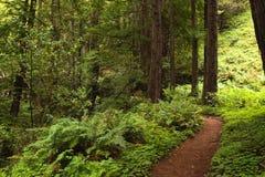 Prova della foresta Fotografia Stock Libera da Diritti