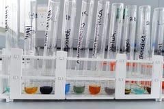 Prova di laboratorio per determinazione dei carboidrati e delle proteine Immagini Stock Libere da Diritti
