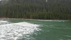 Prova di praticare il surfing sulle piccole onde nell'Alaska stock footage