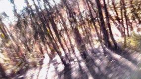 Prova di sfuggire a dalla foresta immagini stock libere da diritti