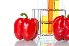 Prova di verdure, modifica genetica, pepe Immagini Stock