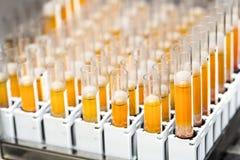 Prova-tubi con liquido giallo in laboratorio immagine stock libera da diritti