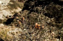 Provadia. Bulgaria beauty plant in ovach Stock Photography