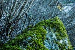Provadia. Bulgaria green beauty stone Stock Photos