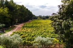 Provecale vineyards provence france Stock Photo