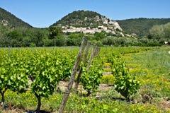 Provençal Vineyards Royalty Free Stock Image
