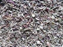 provencal örtar royaltyfri bild