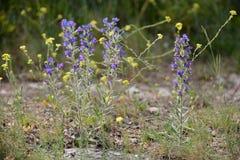 Provencal flowers Stock Photo