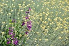 Provencal flowers Stock Photos