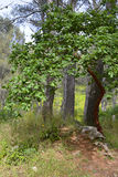 Provencal forest Stock Image