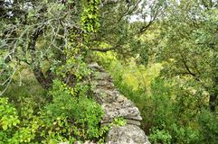 Provencal garrige. Scrubland and old stonewall in the countryside of la Provence, south of France Stock Image