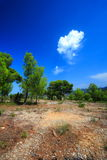 Provencal landscape Royalty Free Stock Photography