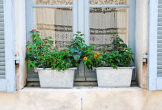 Provencal window. Two metal flower pots with some flowers inside on a windowsill with blue shutters in Lourmarin, France Royalty Free Stock Images