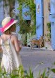 Provence Stockfotografie