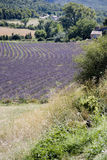 Provence Royalty Free Stock Photography