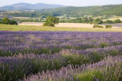 Provence Royalty Free Stock Images