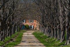 Provence-Allee Lizenzfreies Stockfoto