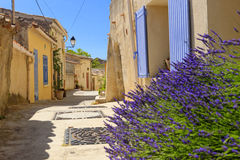 Provence Alleyway. An alley in Provence with lavender plants Royalty Free Stock Images
