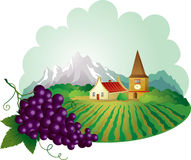 Provence background with grape. Provence landscape with bunch of grapes at the harvest Stock Photos
