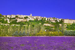 provence blommande lavandefält royaltyfri foto