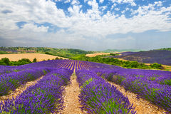 Provence with blooming lavande Stock Photos